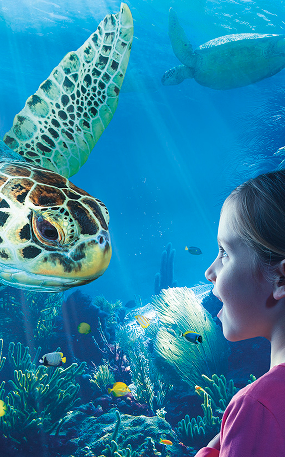 Aquarium Sea Life Attraction Image